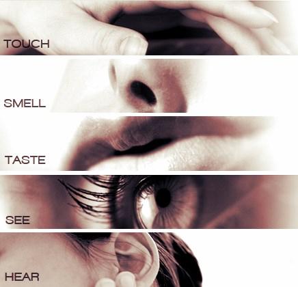 5 чувств человека