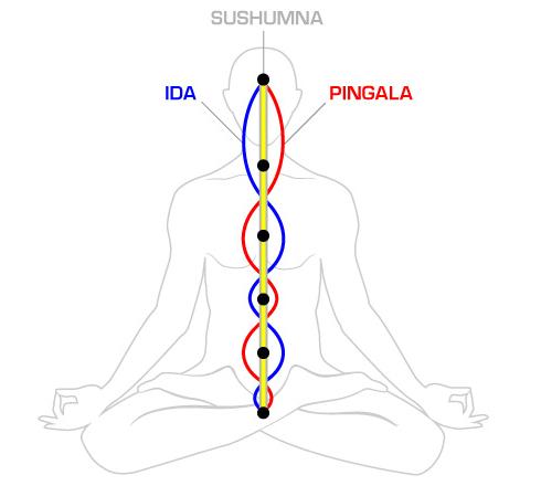 Три основных энергетических канала организма. Sushumna_1